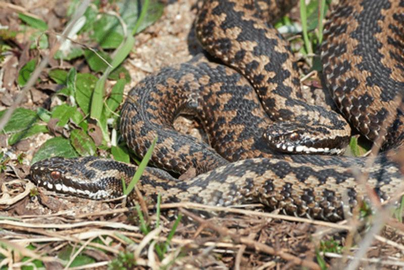 Répulsif serpent : des méthodes naturelles efficaces