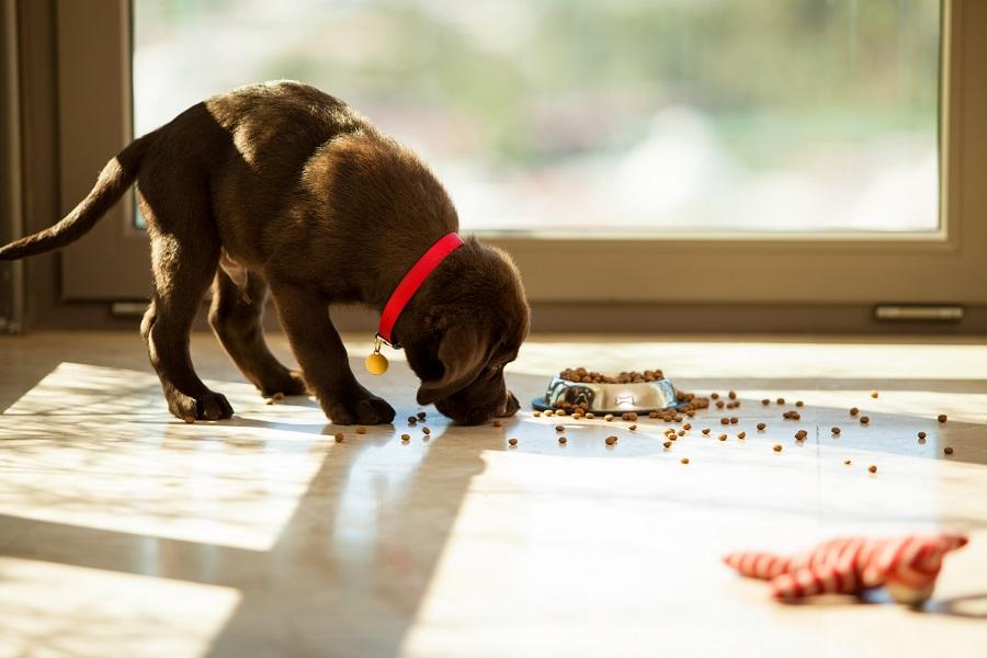 Où acheter mes croquettes pour chien ?