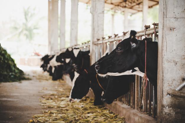 Les différents animaux dans l'élevage français